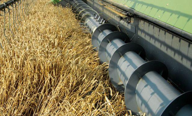 Ya hay registradas declaraciones de exportación por 8.277.387 de toneladas del trigo 17/18.