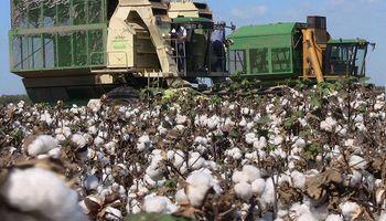 Trabajadores algodoneros obtuvieron un aumento salarial del 30 %