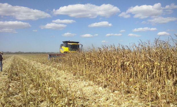 Estimaciones privadas previas al informe del USDA de abril.