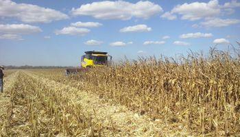 Pese a las bajas de Chicago, el maíz volvió a subir en el mercado local