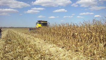 Maíz: un productor entrerriano necesita un rendimiento de 49 quintales para cubrir los costos