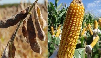 Ajuste en las estimaciones: ¿más maíz, menos soja?