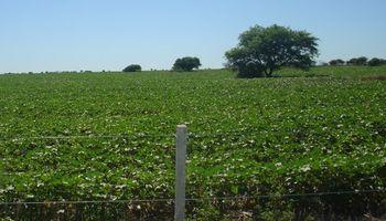 Córdoba: sube el costo promedio de los arrendamientos agrícolas