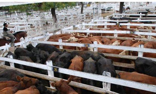 Buena salida en vacas y toros