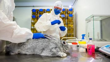 Covid: Rusia ya tiene vacunas para animales y la Argentina las quiere