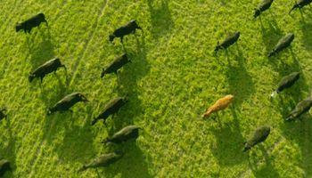 Premio Agtech Ganadero: estos son los proyectos que imaginan la ganadería del futuro