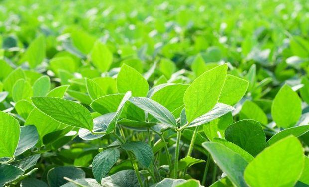 En Agroindustria, diversas fuentes creen que finalmente la rebaja se postergará.