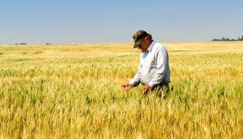 Productor agropecuario: la mirada detrás de un oficio a cielo abierto