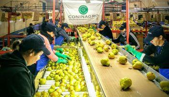Se realizó el primer envío de peras a Perú desde Río Negro
