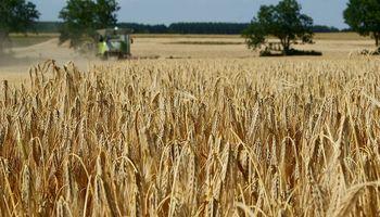 Crecen los reclamos para que terminen las trabas al trigo