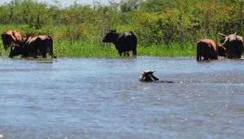 Alertan por una inminente crecida del río Paraná en territorio santafesino