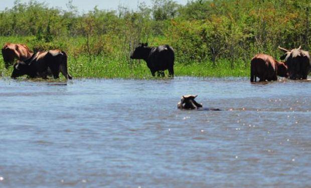 Aumentaron las reservas de agua hasta superar la capacidad de absorción de los suelos.
