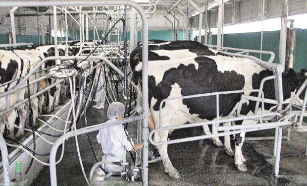 Créditos blandos para el sector lechero