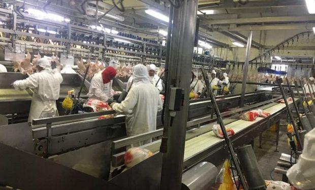 En Cresta Roja se hizo una prueba de faena con 40.000 pollos. Foto:Ovoprot.