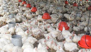 Scioli intervino la avícola Rasic para evitar despidos