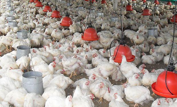 En los últimos meses se destinó gran cantidad de dinero público para permitir la continuidad de la avícola Rasic.