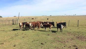 Cría bovina lidera el crecimiento de rentabilidad