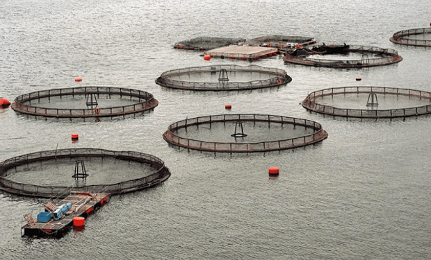 Primer país del mundo: se prohíbe la cría de salmón en Tierra del Fuego    Agrofy News
