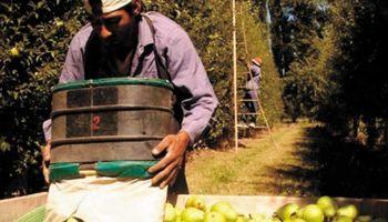 Crisis frutícola: buscan que los créditos lleguen a los pequeños productores