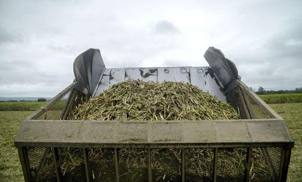 """Productores de bioetanol piden medidas urgentes: """"Esta industria está al borde del colapso"""""""