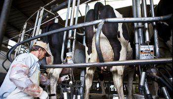 Productores lecheros: la crisis más grande de la historia