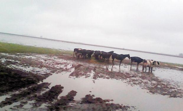 La producción de leche cayó hasta 30% en las principales cuencas.
