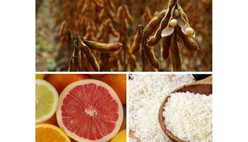 De la soja a las naranjas: pérdida de rentabilidad es una constante