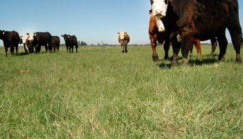 ¿Cuánto alimento habrá para los animales? Investigadores predicen el forraje disponible con satélites