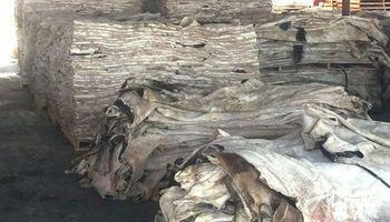 Certifican la primera exportación de 100 toneladas de cueros bovinos a China