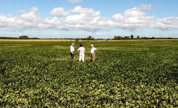 El monitoreo permanente, clave para evaluar la sanidad de los cultivos. Foto: Archivo La Nación