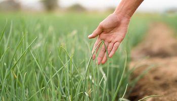 El rol de la agricultura en la alimentación: cuatro tendencias que definen el futuro