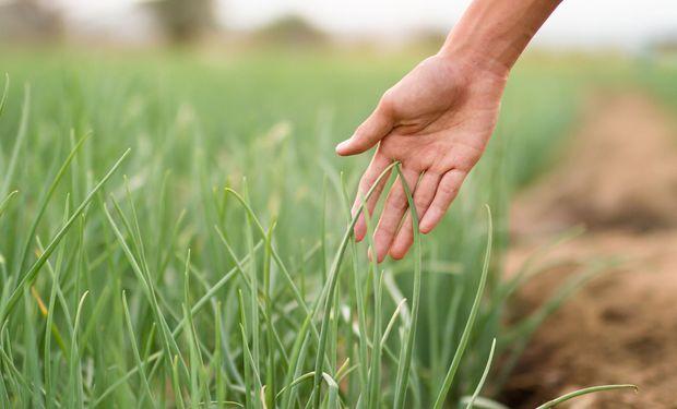 La población mundial está en crecimiento y, también, la necesidad de encontrar nuevas formas de alimentar a las personas.