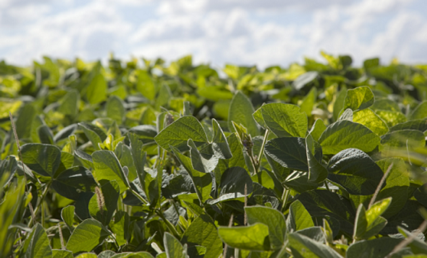Los productores comprendidos son los que llevan adelante su actividad en las provincias de Salta, Jujuy, Formosa, Santiago del Estero, Tucumán, Corrientes, Misiones, Catamarca, La Rioja y Chaco.