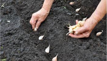 Guía para cultivar frutas y verduras en casa