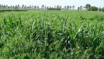Los cultivos de servicio duplicaron su superficie en la última campaña