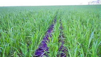 El mejor canal son los cultivos