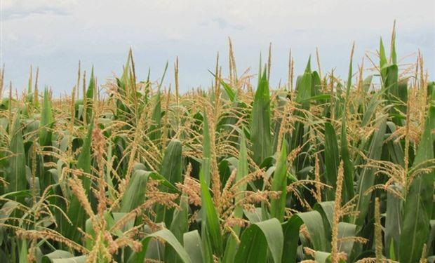 Se deterioran los cultivos en EE.UU.