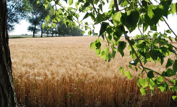 La idea es promover mejoras en la salud del suelo, eficiencia de recursos y la protección de hábitats naturales.