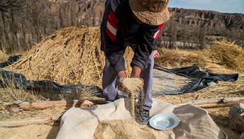 Cultivos andinos: sabores que son historia, conocimiento y arraigo