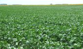 Clima: especialistas del INTA analizan los pronósticos para la toma de decisiones de la campaña agrícola