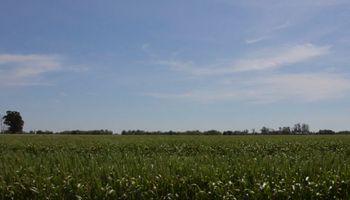 Una región lidera el ranking de siembra de cultivos de servicio