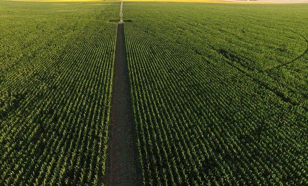 El servicio permitirá obtener información de los cultivos.