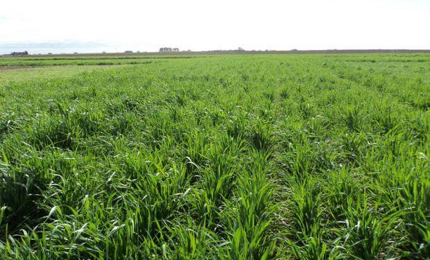 Es posible incrementar rápidamente el consumo de agua en los suelos a través de cultivos de cobertura o de dobles cultivos.