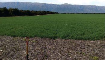 """Analizan los cultivos de cobertura en San Luis: """"Es una tecnología que nos permite revalorizar la agronomía"""""""