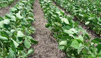 Mejorar la productividad con cultivos de cobertura