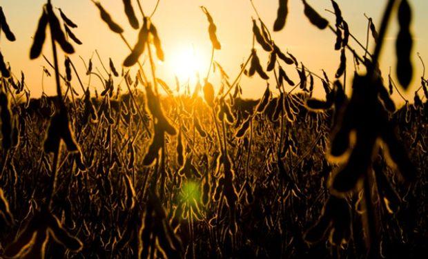 Alrededor del 70 por ciento de las áreas productoras de soja y maíz recibirían lluvias en los próximos cinco días.