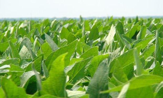 Los cultivos no dan tregua en Estados Unidos