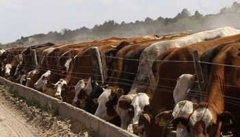 UE aprobó el ingreso de Argentina a la cuota de carne de Feed Lot