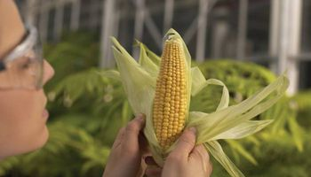 En los últimos 20 años se sembraron dos mil millones de hectáreas con cultivos transgénicos