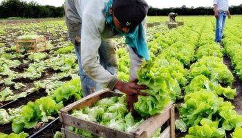 Los pequeños productores agroindustriales contarán con asistencia financiera